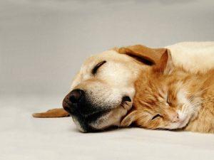 Assicurazione online animali domestici: prezzo e condizioni