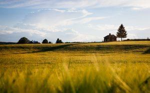 Affittare un terreno agricolo