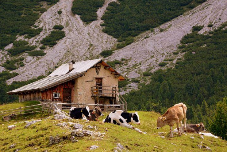 Affitto baita in montagna